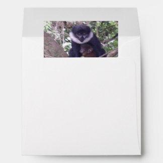 Black L'Hoest's Monkey Cradles Little Brown Baby Envelope