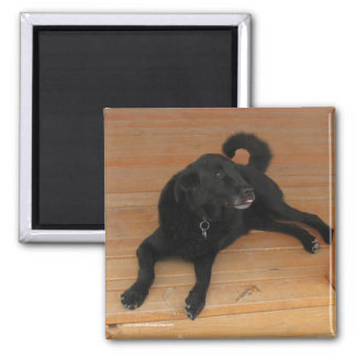 Black Lab and Dead Lizard Gift - Ranch Dog Lover 2 Inch Square Magnet