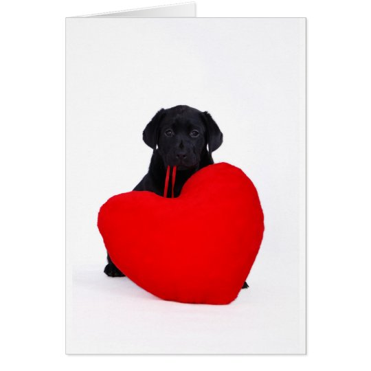 Black lab and heart card