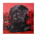 Black Lab and roses Tiles
