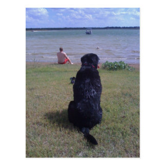 Black Lab at Lake Postcard
