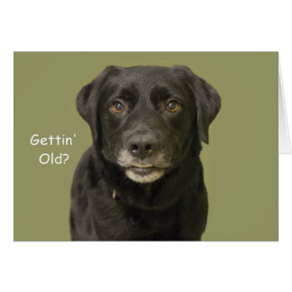 Black Lab Birthday Card by Focus for a Cause
