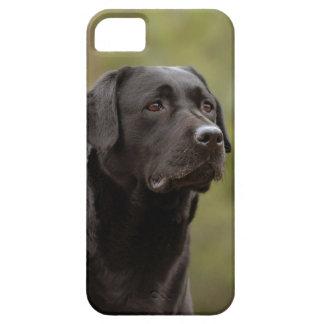 Black lab iPhone 5 cases