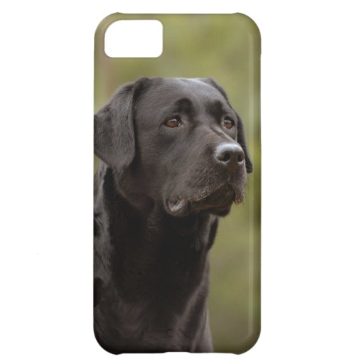 Black lab cover for iPhone 5C