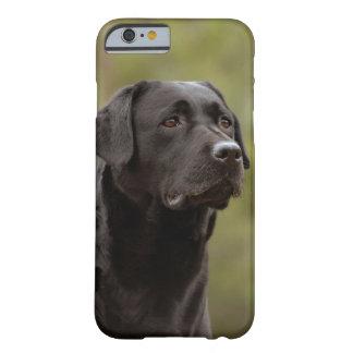 Black lab iPhone 6 case