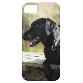 Black Lab iPhone 5 Case