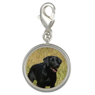 Black Lab Charms