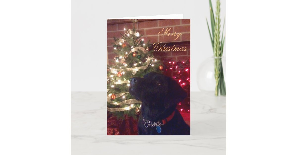 Black Lab Christmas Card | Zazzle.com