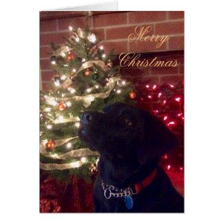 Labrador Retriever Christmas Cards - Invitations, Greeting & Photo ...