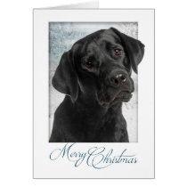 Black Lab Christmas Card