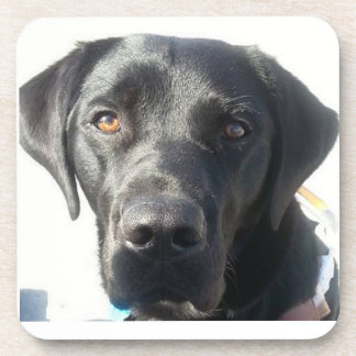 Black Lab Coaster