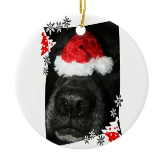 Black lab dog nose with santa hat photograph ornament