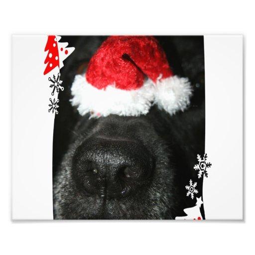 Black lab dog nose with santa hat photograph