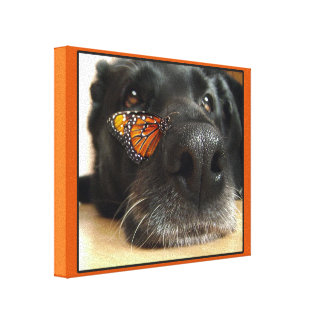 BLack Lab Dog With Butterfly Canvas Print