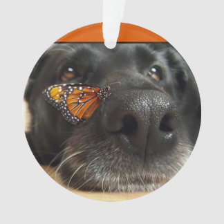 BLack Lab Dog With Butterfly Ornament