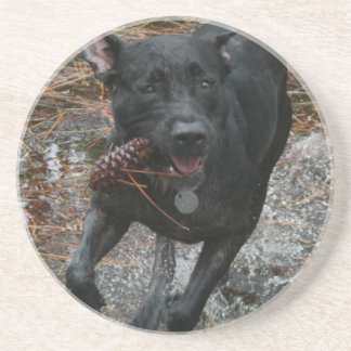 Black Lab Dog with Pinecone running Drink Coaster