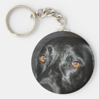 black lab eyes keychain