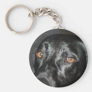 black lab eyes keychain
