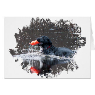 Black lab fetching floatie greeting cards