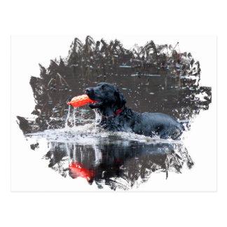 Black lab fetching floatie postcard