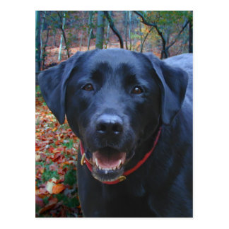 Black Lab Fine Art Painting  of Hunting Dog Postcard