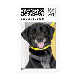 Black Lab/German Shorthaired Pointer Postage Stamp