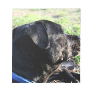 Black Lab Head Turned Away Picture Notepad