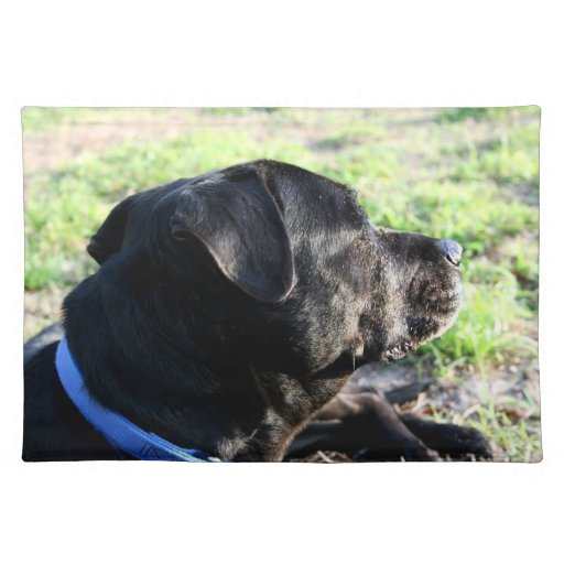 Black Lab Head Turned Away Picture Placemat