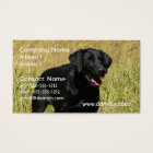 Black Lab in Field Business Cards