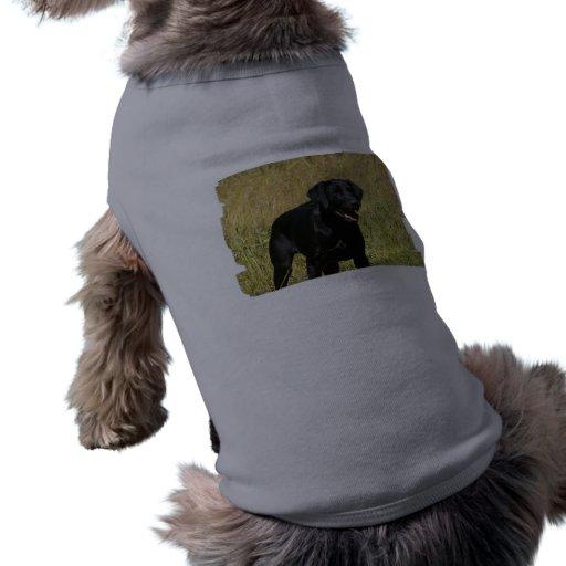 Black Lab in Field  Pet Shirt