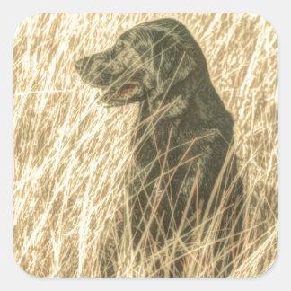 Black lab in wheat field sticker