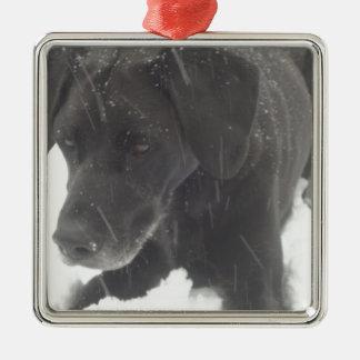 Black Lab in Winter Snow Metal Ornament