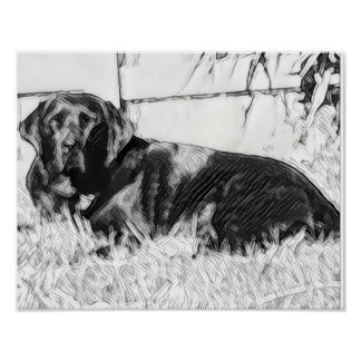 Black Lab Laying in the Sun Sketch Poster