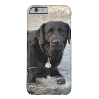 Black Lab Love Barely There iPhone 6 Case