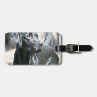 Black Lab  Luggage Tag