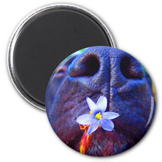 Black lab mix nose, small purple flower picture 2 inch round magnet