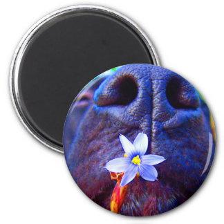 Black lab mix nose, small purple flower picture fridge magnet