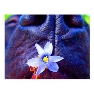 Black lab mix nose, small purple flower picture postcard