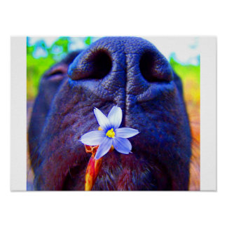 Black lab mix nose, small purple flower picture posters