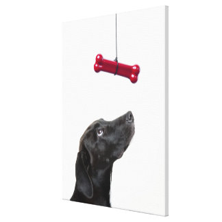 Black lab mixed dog with red dog bone canvas print