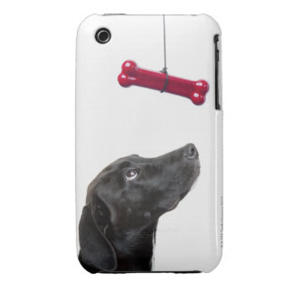 Black lab mixed dog with red dog bone iPhone 3 cover