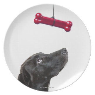 Black lab mixed dog with red dog bone dinner plate