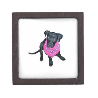 Black Lab Pink Bandana Puppy image Jewelry Box