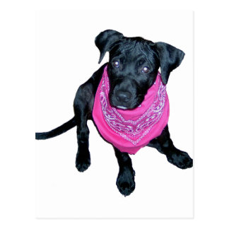 Black Lab Pink Bandana Puppy image Postcard