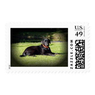 Black Lab Stamp