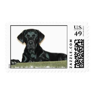 Black Lab Postage Stamp