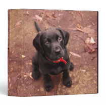 Black Lab Puppy 3 Ring Binder