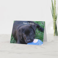 Black Lab Puppy Card