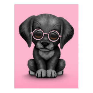 Black Lab Puppy Dog With Reading Glasses, pink Postcard