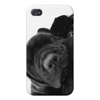 Black Lab Puppy  iPhone Case iPhone 4/4S Covers